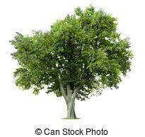 나무 일러스트 - Google 검색