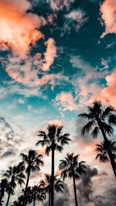 blue sky with clouds, tall palm trees, aesthetic iphone wallpaper Aesthetic Iphone Wallpaper, Aesthetic Wallpapers, Beautiful World, Beautiful Places, Beautiful Sky, Beautiful Landscapes, Tumblr Wallpaper, Tree Wallpaper, Wallpaper Quotes