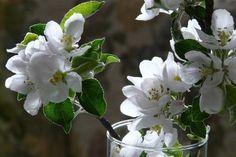 Una cura particolare per i complementi: belle tende, cornici d'argento, vasi di fiori. - Doimocasamia