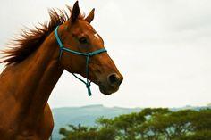 http://eqafe.com #horse #farm #animals #equality #Desteni