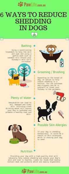 How to reduce shedding in dogs is a common question amongst dog owners.