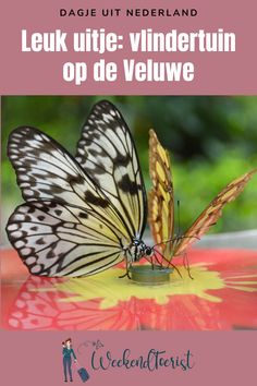 Backpacking, Camping, Weekender, Places To See, Netherlands, Holland, Diys, Destinations, To Go