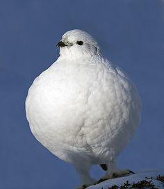 bird watching nunavut
