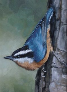 Red breasted nuthatch - Nuthatch - bird painting - Open edition print - bird print by MollySimsFineArt on Etsy Mini Paintings, Landscape Paintings, Original Paintings, Watercolor Bird, Watercolor Paintings, Watercolors, Cardinal Birds, Bird Artwork, Bird Drawings