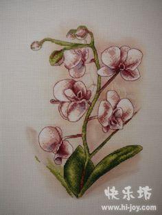 Gallery.ru / Фото #1 - orchidea - mizia