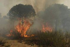 <p>* El fuego está muy cerca del parque nacional de Doñana, en Huelva, una de las áreas protegidas más importantes de Europa; más