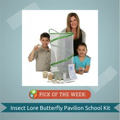 Insect Lore, the company that invented the butterfly habitat for children, has formulated an educational kit expressly for classroom teachers. Classrooms receive all the tools necessary to raise their caterpillars, then chrysalides, then beautiful butterflies before setting them free. The life cycle length is three weeks.