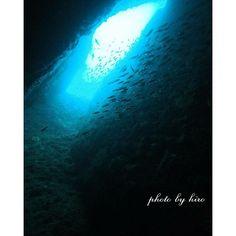 【divemasterhiro】さんのInstagramをピンしています。 《海っていいよね🌊ヽ(*´▽)ノ♪青の世界 #ダイビング #青 #青の世界#オリンパス #オリンパスペン #olympus #olympuspen #海🌴  #海が好き #海 #diving #sea#blue #blue#写真好きな人と繋がりたい #写真撮ってる人と繋がりたい #ファインダー越しの私の世界#お気に入りの写真#伊豆 #雲見 #water#海が大好き #西伊豆 #旅行 #プチ旅行 #青の洞窟》
