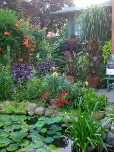 Tropical Garden in zone 5 Informations About Tropical Garden in zone 5 Pin You can easily use my pro Seaside Garden, Garden Oasis, Pond Landscaping, Tropical Landscaping, Landscaping Design, Water Garden, Lawn And Garden, Ferns Garden, Pond Plants