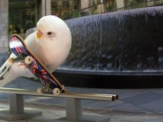 chicks on skateboards