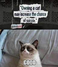 grumpy cat.  I could become a cat lover if I had this cat!!