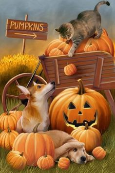 Look at this Evergreen Cat & Dog Pumpkin Patch Outdoor Flag on today! Fete Halloween, Halloween Pictures, Halloween Cat, Holidays Halloween, Vintage Halloween, Halloween Printable, Halloween Labels, Pretty Halloween, Halloween Cartoons