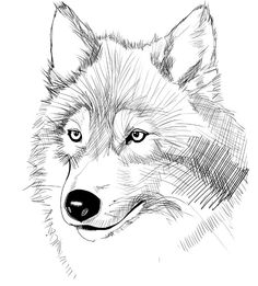 hand drawn wolves - Google Search | illustration | Pinterest ...