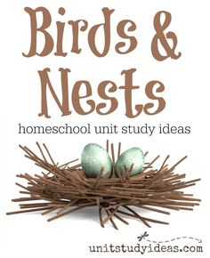 New bird nest preschool unit studies ideas My Father's World, Bird House Kits, Animal Science, Animal Habitats, Bird Theme, Nature Study, Backyard Birds, Home Schooling, Study Ideas