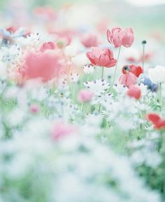 Pretty flowers, washed out photography, pastels Flowers Nature, My Flower, Wild Flowers, Beautiful Flowers, Pastel Flowers, Flower Wallpaper, Belle Photo, Mother Nature, Planting Flowers