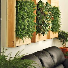 Unique wall-mounted planters that can grow flowers, succulents, ferns and ivies indoors right on your living room wall.