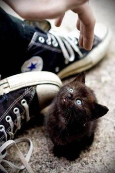22 Scarily Cute Black Cats That Will Put A Spell On You   Petslady.com
