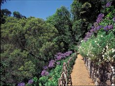 Walking in Madeira Island