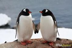 penguins holding hands - Google Search