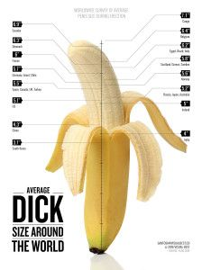 average size of male organ
