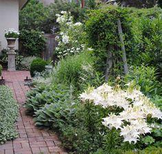 Tone on Tone: Our White Border Garden