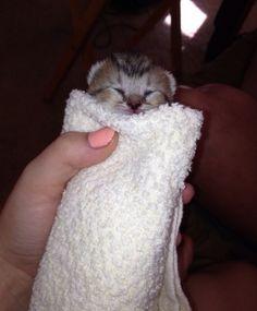 グルグル巻きな子猫