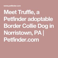 Meet Truffle, a Petfinder adoptable Border Collie Dog in Norristown, PA | Petfinder.com