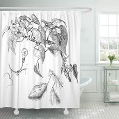 Semtomn Shower Curtain Black Plant Sweet Potato Ipomoea Batatas Vintage from Meyers Shower Curtains Sets with 12 Hooks 60 x 72 Inches Waterproof Polyester Fabric