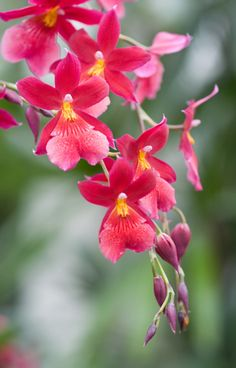 """Orchids at Wisley"" ~ Photography by Christina Burrows"