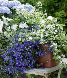 Balcony box with hydrangeas, magical snow and lobelia – Photo 13 – Balcony box with … - Pflanzideen Lobelia Flowers, Planting Flowers, Hydrangeas, Balcony Garden, Garden Pots, Potted Plants Patio, Flowering Plants, Fleurs Diy, Diy Garden Projects