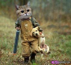 Like a Boss - Cat Hunting Dog