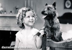 """Terry, a Cairn Terrier, is probably best known for her gender-bending role of Toto in the 1939 classic, """"The Wizard of Oz,"""" but her first major role was in the 1934 Shirley Temple movie """"Bright Eyes."""" In that movie, Terry played Rags, the lovable companion to Shirley."""