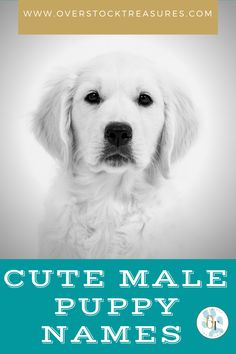 Hello pet lovers, dog lovers Are you a new pet owner? Did you just get a cute puppy or cute dog? Congrats! I created a list of unique dog names male list. You are welcome to have my wonderful list of dog names boy unique list. This list is also for dog male names for puppies. They are super cute puppy names male. I love these male dog names / dog boy unique list.#puppy #puppynames #names #dognames #dog #doglove Cute Male Dog Names, Unique Cat Names, Cute Puppy Names, Pet Memorial Gifts, Cat Memorial, Super Cute Puppies, Cute Dogs, Pet Loss Grief, Famous Dogs