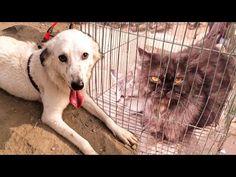 Sadar Empress Market Pet Shop | Visiting Sunday Dogs & Cats Market | Kar... Karachi Pakistan, Pet Shop, Dog Cat, Sunday, Marketing, Pets, Animals, Shopping, Domingo
