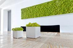 Centre commercial à Mulhouse Best Office Plants, Moss Wall Art, Moss Art, Garden Wall Designs, Vertical Garden Wall, Vertical Gardens, Outdoor Daybed, Green Architecture, Scandinavian Home