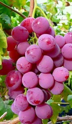 Nutrition Guide For Diabetics Fruit And Veg, Fruits And Veggies, Fresh Fruit, Vegetables, Fruit Plants, Fruit Garden, Fruit Trees, Beautiful Fruits, Beautiful Flowers