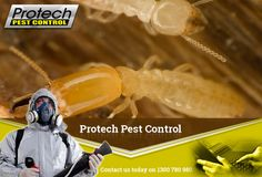 Termite inspection services in Melbourne - An expert team, effective solution and decades of experience by Protech Pest Control.