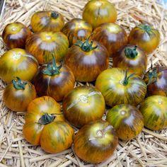 Blue Tomato Muddy Waters ブルートマト・マディ・ウォーターズ