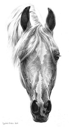 Horse art. For more great pins go to @KaseyBelleFox