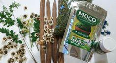 Moringa Life / 100%mo  Moringa é saúde!
