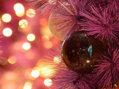 christmas lights 3342