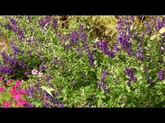 Color Harmony in the Garden   At Home With P. Allen Smith