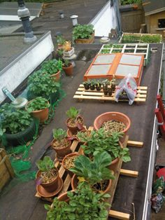 growing veggies on your roof. great idea to win some extra space