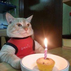 37 ideas for memes divertidos de gatos I Love Cats, Crazy Cats, Cool Cats, Funny Cats, Funny Animals, Cute Animals, Animal Memes, Cat Memes, Funny Memes