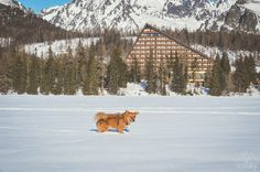 Kutyával a hóban: Magas-Tátra, Szlovákia - dogventure.hu Hiking Dogs, Marvel, Snow, Outdoor, Outdoors, Outdoor Games, Outdoor Living, Eyes