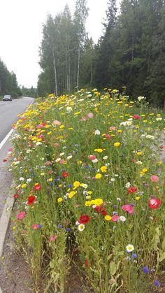 Kiitos #Riihimäki kaupunki #puutarhuri kauniista #kukkaistutuksista #kotikaupunki #Häme #ilosilmälle Kuva: Twitter @merkauppi Merja Kauppinen