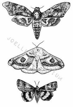 Tatuaje temporal de polillas polilla de la por JoellesEmporium
