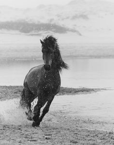 Horse running on the beach, black and white horse photography. Untitled 13 - Wild Horse