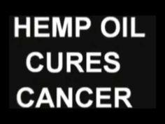 Cannabis Oil Cures All Cancer | #1Cure4Cancer | www.mycutcorep.com/JamesTaylor