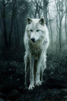 Lobo blanco...!!!